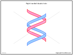Right-handed double helix