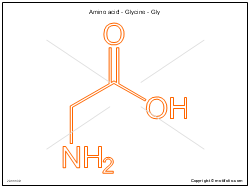 Amino acid - Glycine - Gly