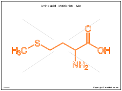 Amino acid - Methionine - Met
