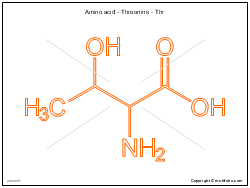 Amino acid - Threonine - Thr