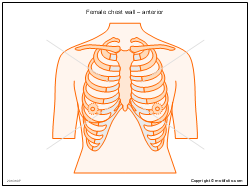 Female chest wall � anterior