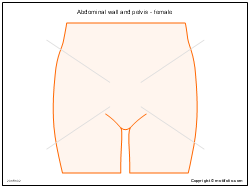 Abdominal wall and pelvis - female