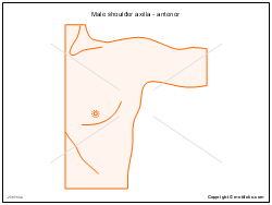 Male shoulder axilla - anterior