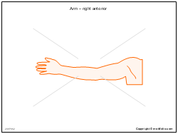 Arm � right anterior