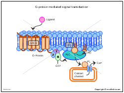 G-protein mediated signal transduction