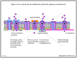 Class of ion channels stimulated by different gating mechanisms