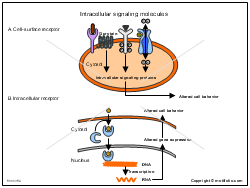 Intracellular signaling molecules
