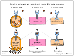 Signaling molecules are versatile and induce differential responses