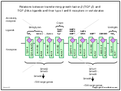 Relations between transforming growth factor-beta and TGF-beta-like ligands and their type I and II receptors