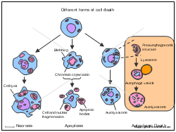 Different forms of cell death