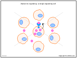 Autocrine signaling - a single signaling cell