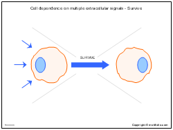 Cell dependence on multiple extracellular signals - Survive