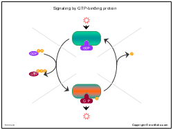 Signaling by GTP-binding protein