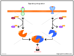 Signaling integration