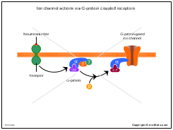 Ion channel actions via G-protein coupled receptors