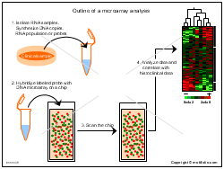 Outline of a microarray analysis