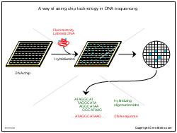 A way of using chip technology in DNA sequencing