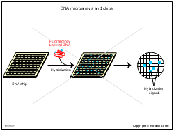 DNA microarrays and chips
