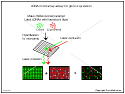 cDNA microarray assay for gene expression