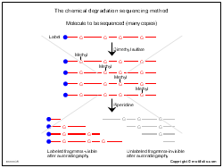 The chemical degradation sequencing method