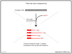 Thermal cycle sequencing