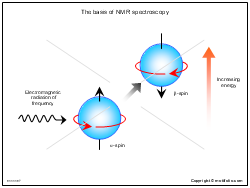 The basis of NMR spectroscopy