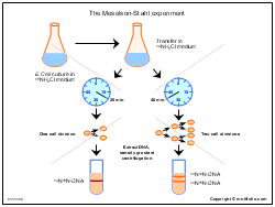 The Meselson-Stahl experiment
