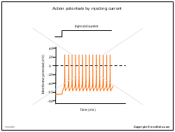 Action potentials by injecting current