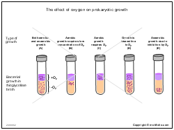 The effect of oxygen on prokaryotic growth