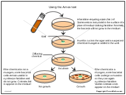 Using the Ames test