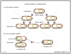 Gene transfer mechanisms