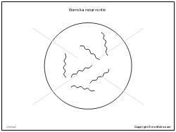 Borrelia recurrentis