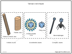 Various viral shapes