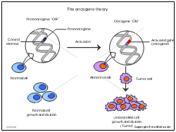 The oncogene theory