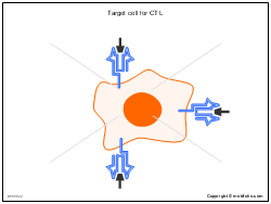 Target cell for CTL