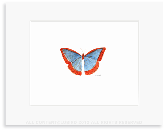 Butterfly-red/blue - Print 8x10