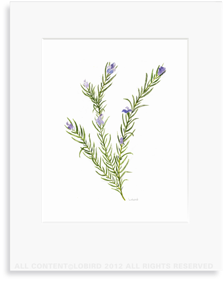 Rosemary - 8 x10 Print in 11x14 mat