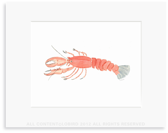 lobster - 8 x 10 Print in 11 x 14 Mat