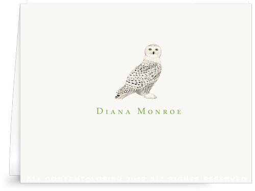 Snowy Owl - Folded Note Cards