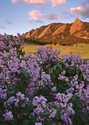 Flatirons and Lilacs-Note