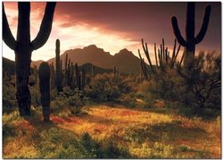 Lower Sonoran Sunrise - Note