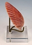 Lucite Shell Holder or Hard to Display Items SOLD