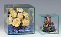 Glass Cube Case Perfect for Dried Flowers Or Other Treasures