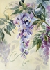 Wisteria By Design