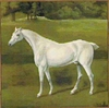 White Horse Cushion Tapestry