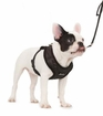 Diva Brooch Soft Dog Harness
