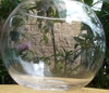 "6"" Glass Bubble Globe Bowl - Clear"