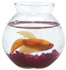 Ivy Betta Glass Fish Bowl