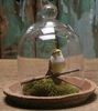 Tabletop Glass Dome