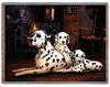 Dalmatians Tapestry Throw